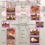 3 Flamingomeer Presentatieblad