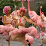 2 Flamingomeer postkaart